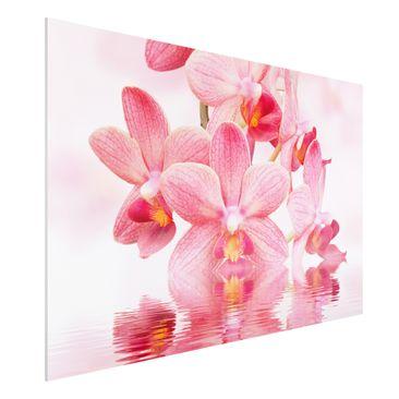 Produktfoto Forex Fine Art Print - Rosa Orchideen...