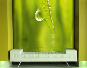Produktfoto Photo Wall Mural Morning Dew II