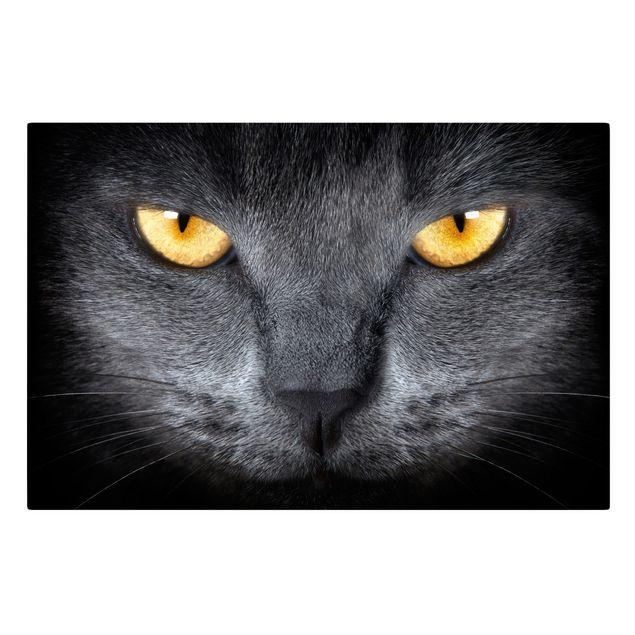 Produktfoto Leinwandbild - Cats Gaze - Quer 2:3, Frontalansicht, Artikelnummer 205152-FF