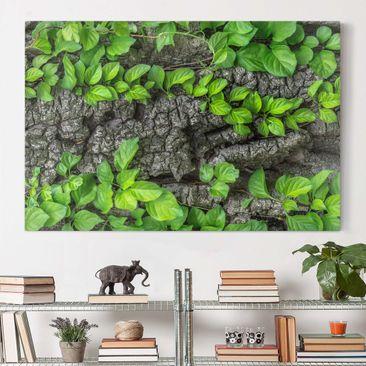 Produktfoto Leinwandbild - Efeuranken Baumrinde - Quer 2:3, vergrößerte Ansicht in Wohnambiente, Artikelnummer 205212-XWA