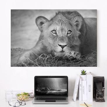 Produktfoto Leinwandbild Schwarz-Weiß - Lurking Lionbaby - Quer 2:3, vergrößerte Ansicht in Wohnambiente, Artikelnummer 205350-XWA