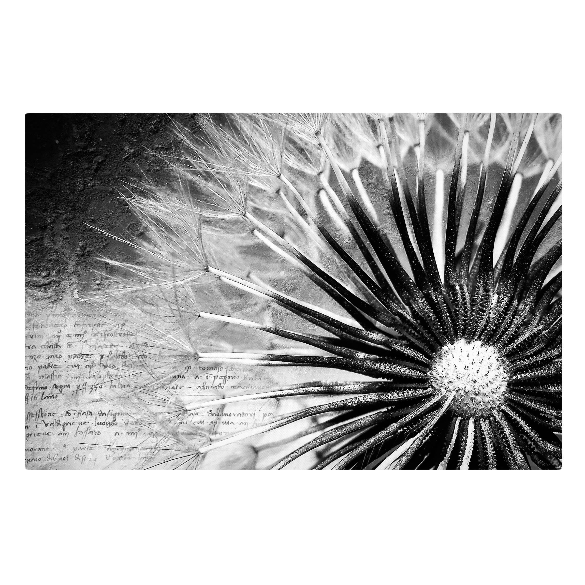 Leinwandbild - Pusteblume Schwarz & Weiß - Quer 2:3