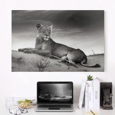Produktfoto Leinwandbild Schwarz-Weiß - Resting Lion - Quer 2:3, vergrößerte Ansicht in Wohnambiente, Artikelnummer 205466-XWA