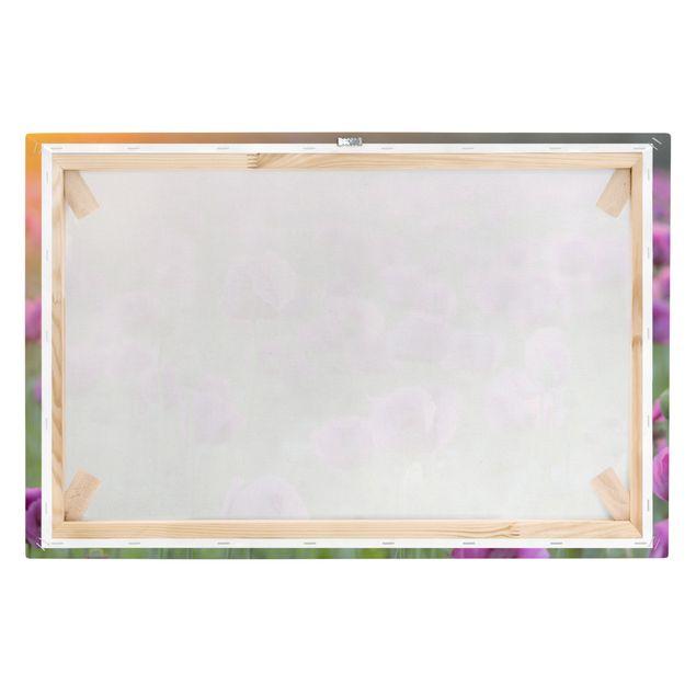 Produktfoto Leinwandbild - Violette Schlafmohn Blumenwiese im Frühling - Quer 2:3, Keilrahmen Rückseite, Artikelnummer 205874-FB