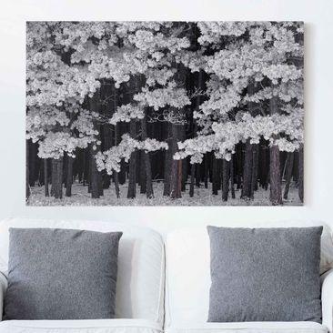 Produktfoto Leinwandbild Schwarz-Weiß - Wald mit Raureif in Österreich - Quer 2:3, vergrößerte Ansicht in Wohnambiente, Artikelnummer 205875-XWA