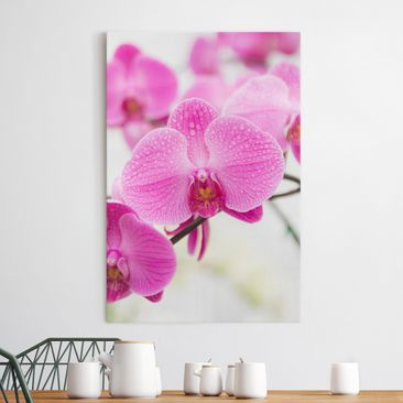 Immagine del prodotto Stampa su tela Close orchid - Verticale 3:2