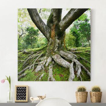 Produktfoto Leinwandbild - Alter Baum - Quadrat 1:1