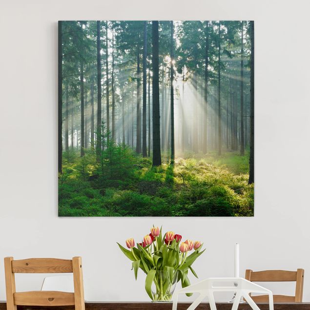 Produktfoto Leinwandbild - Enlightened Forest - Quadrat 1:1, in Wohnambiente, Artikelnummer 206383-WA