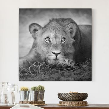 Product picture Canvas Art - Lurking Lionbaby - Square...