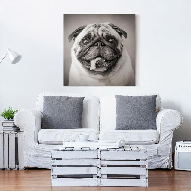 Produktfoto Leinwandbild Schwarz-Weiß - Lustiger Mops - Quadrat 1:1, in Wohnambiente, Artikelnummer 206566-WA