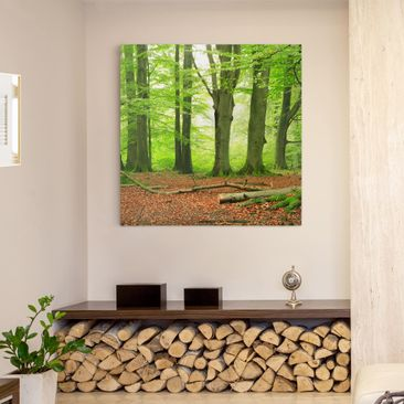 Product picture Canvas Art - Mighty Beech Trees - Square...