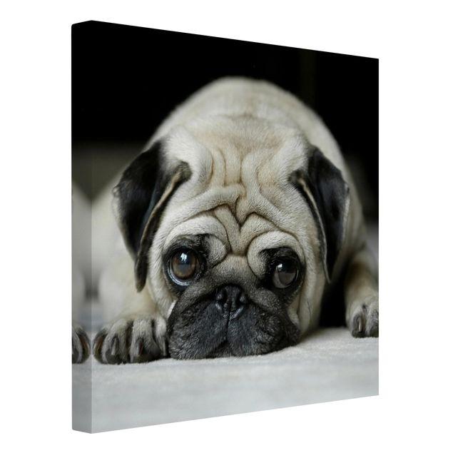 Produktfoto Leinwandbild Schwarz-Weiß - Pug Loves You - Quadrat 1:1, Spiegelkantendruck links, Artikelnummer 206702-FL