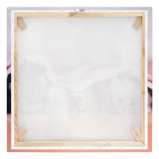 Produktfoto Leinwandbild - Sugar-Sweet - Quadrat 1:1, Keilrahmen Rückseite, Artikelnummer 206798-FB