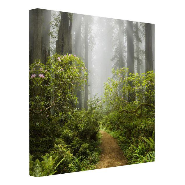 Produktfoto Leinwandbild - Nebliger Waldpfad - Quadrat 1:1, Spiegelkantendruck links, Artikelnummer 207071-FL