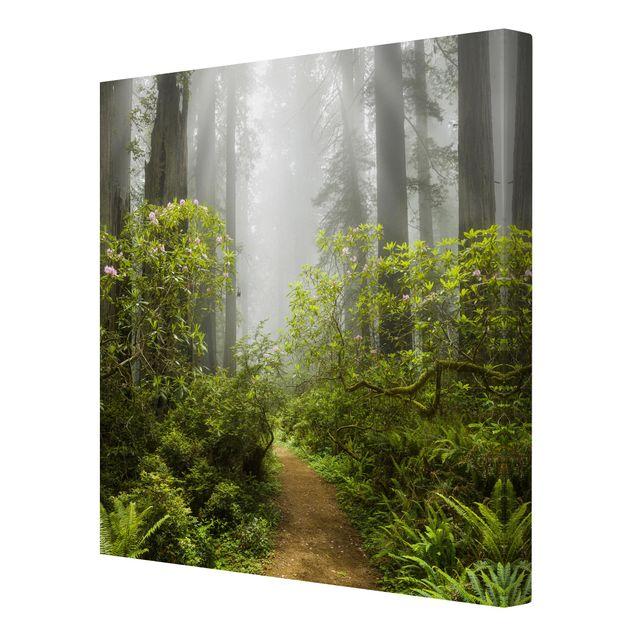 Produktfoto Leinwandbild - Nebliger Waldpfad - Quadrat 1:1, Spiegelkantendruck rechts, Artikelnummer 207071-FR