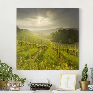 Produktfoto Leinwandbild - Sonnenstrahlen Weinberg - Quadrat 1:1, vergrößerte Ansicht in Wohnambiente, Artikelnummer 207082-XWA