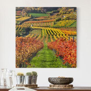 Produktfoto Leinwandbild - Weinberg Blick - Quadrat 1:1, vergrößerte Ansicht in Wohnambiente, Artikelnummer 207091-XWA