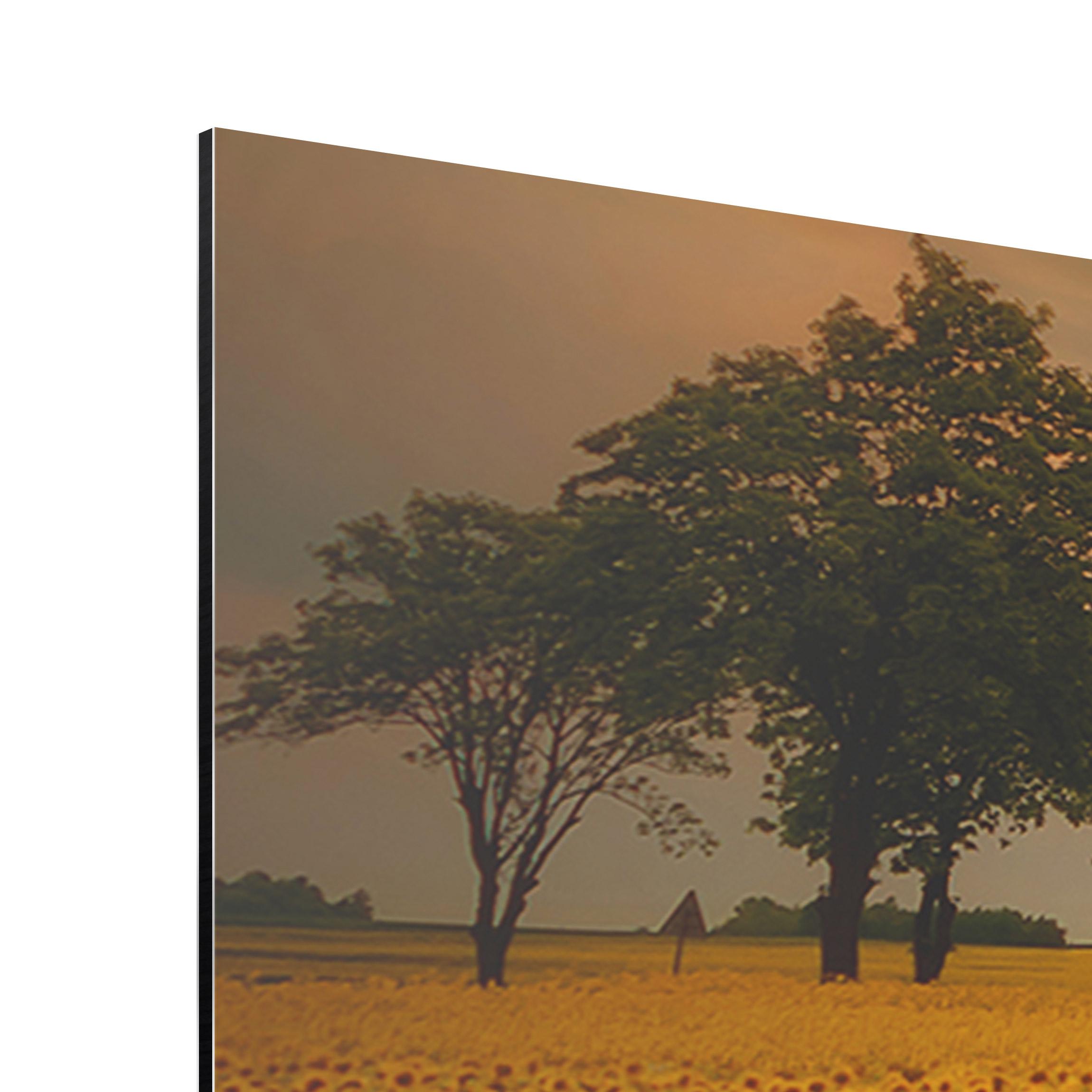 alu dibond bild feld mit sonnenblumen panorama quer. Black Bedroom Furniture Sets. Home Design Ideas