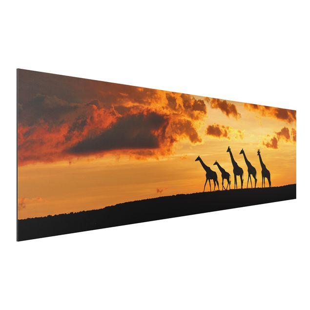 alu dibond bild f nf giraffen panorama quer. Black Bedroom Furniture Sets. Home Design Ideas