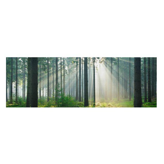 Produktfoto Leinwandbild - Enlightened Forest - Panorama Quer, Frontalansicht, Artikelnummer 207836-FF