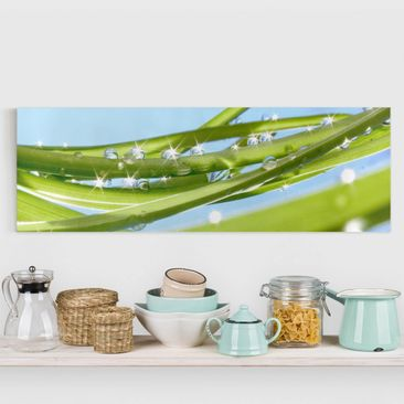 Produktfoto Leinwandbild - Fresh Green - Panorama Quer, vergrößerte Ansicht in Wohnambiente, Artikelnummer 207866-XWA