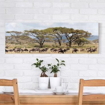 Immagine del prodotto Stampa su tela - Herd Of Wildebeest In The Savannah - Panoramico
