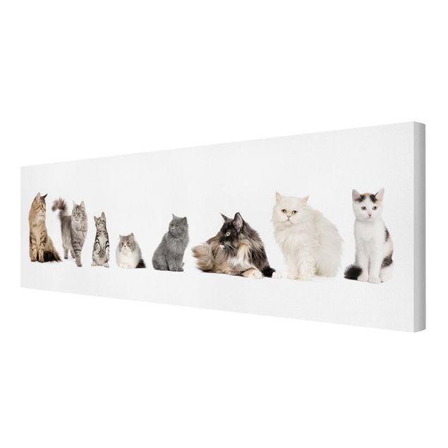 Produktfoto Leinwandbild - Katzenbande - Panorama Quer, Spiegelkantendruck rechts, Artikelnummer 207919-FR
