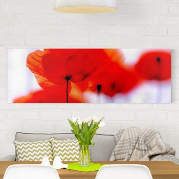 Produktfoto Leinwandbild - Magic Poppies - Panorama...