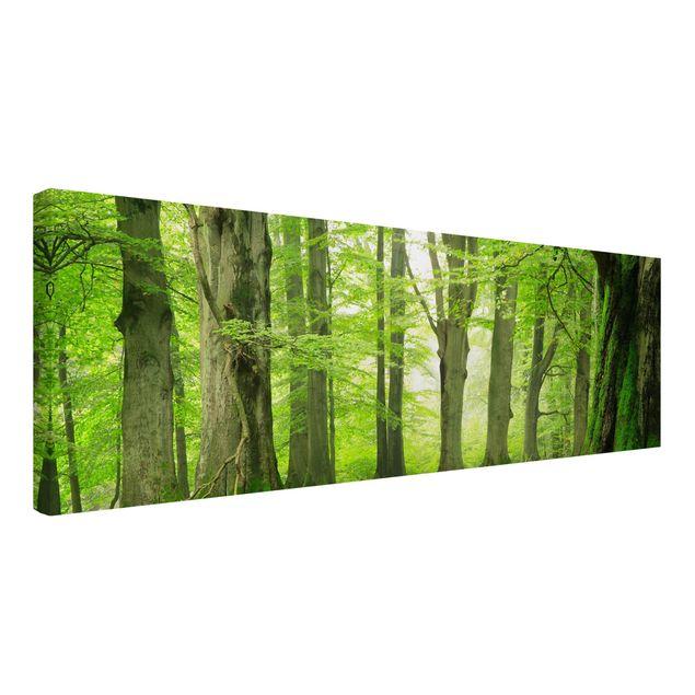 Produktfoto Leinwandbild - Mighty Beech Trees - Panorama Quer, Spiegelkantendruck links, Artikelnummer 207956-FL