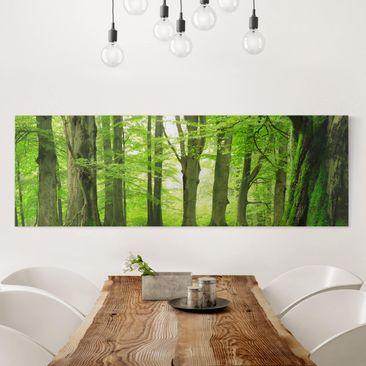 Produktfoto Leinwandbild - Mighty Beech Trees - Panorama Quer, vergrößerte Ansicht in Wohnambiente, Artikelnummer 207956-XWA