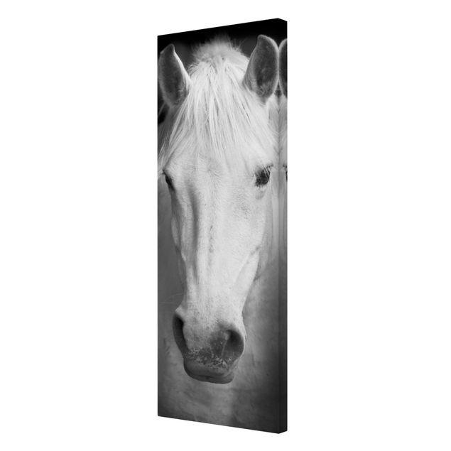 Produktfoto Leinwandbild Pferd Schwarz-Weiß  - Dream of a Horse - Panoramabild Hoch, Spiegelkantendruck rechts, Artikelnummer 208304-FR