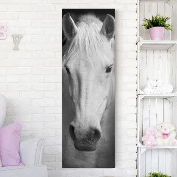 Produktfoto Leinwandbild Pferd Schwarz-Weiß  -...
