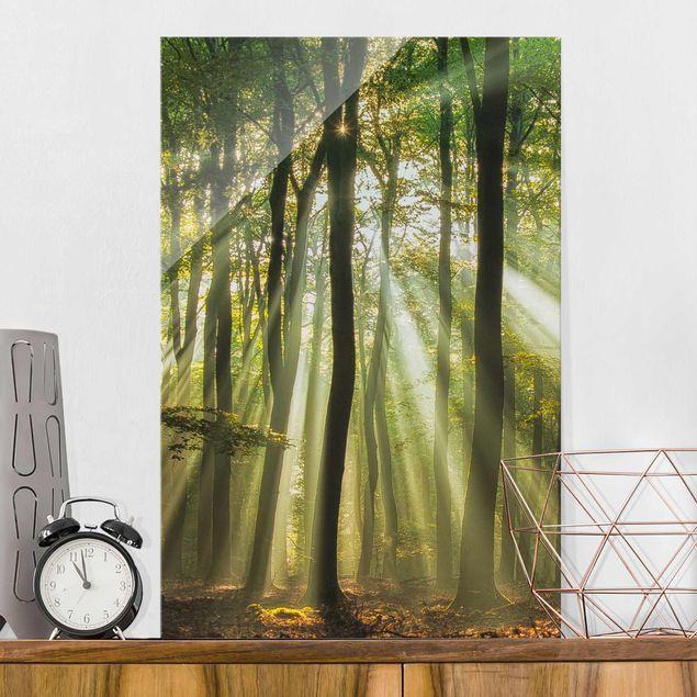 Produktfoto Glasbild - Sonnentag im Wald - Hoch 3:2