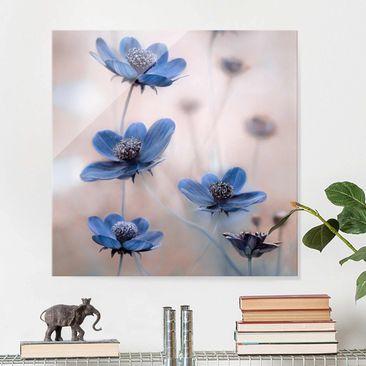 Produktfoto Glasbild - Blaue Kosmeen - Quadrat 1:1