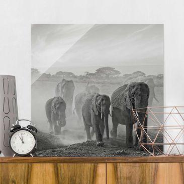 Produktfoto Glasbild - Elefantenherde - Quadrat 1:1