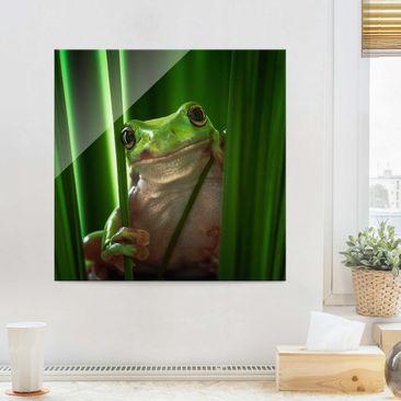 Produktfoto Glasbild - Fröhlicher Frosch - Quadrat 1:1