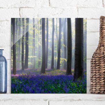 Produktfoto Glasbild - Frühlingstag im Wald - Quadrat 1:1