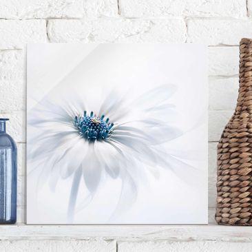 Produktfoto Glasbild - Gänseblümchen in Blau - Quadrat 1:1