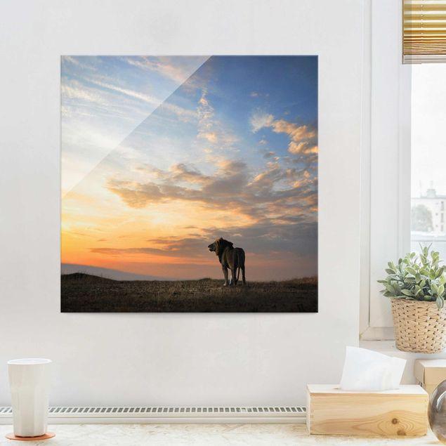 Produktfoto Glasbild - Löwe im Sonnenuntergang - Quadrat 1:1