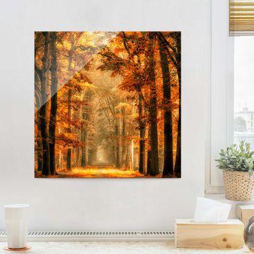 Immagine del prodotto Quadro in vetro - Foresta Incantata in Autunno - Quadrato 1:1