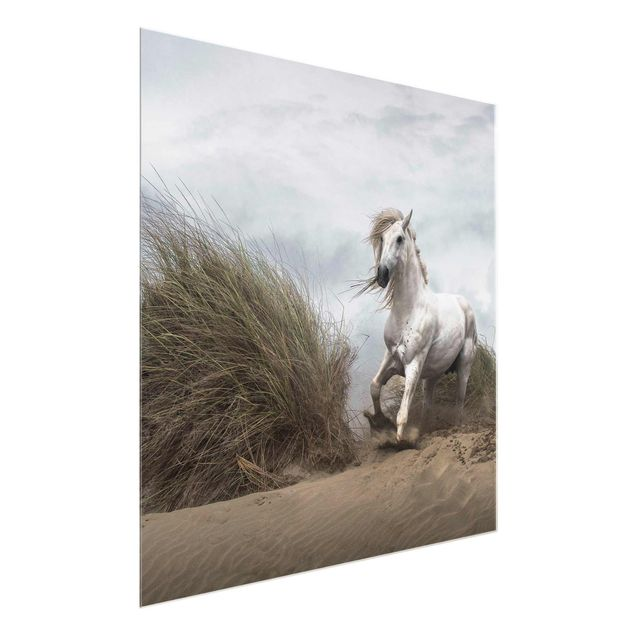 Produktfoto Glasbild - Weißes Pferd in den Dünen - Quadrat 1:1