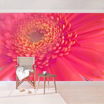 Produktfoto Vliestapete - Pink Herbera  - Fototapete Quadrat