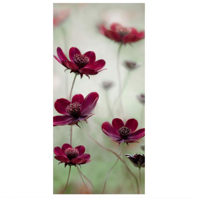Produktfoto Raumteiler - Pinke Kosmeen - 250x120cm