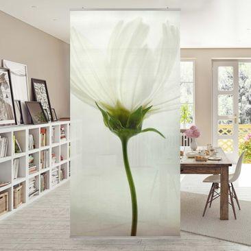 Produktfoto Raumteiler - Weiße Cosmea - 250x120cm