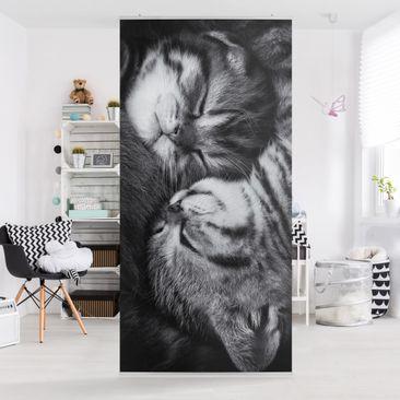 Produktfoto Raumteiler - Zwei Kätzchen - 250x120cm