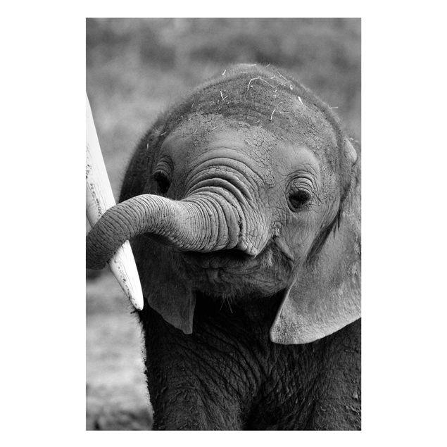 Produktfoto Magnettafel - Elefantenbaby - Memoboard Hoch 3:2