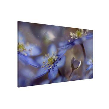 Produktfoto Magnettafel - Anemonen in Blau - Memoboard Quer 2:3