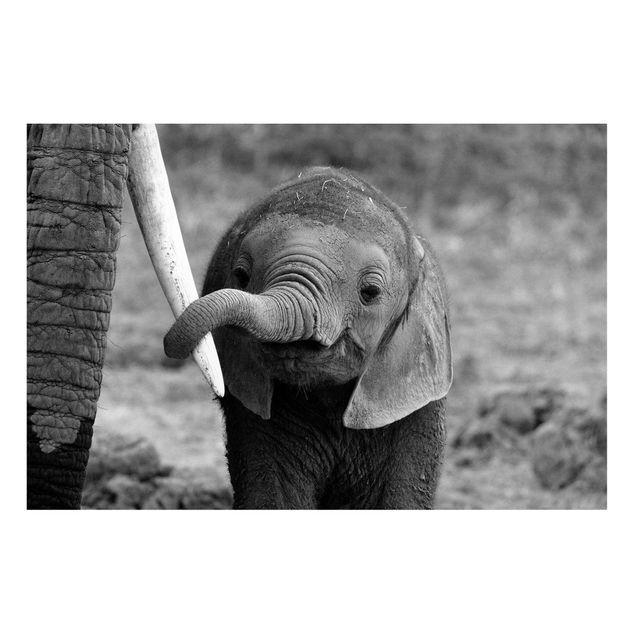 Produktfoto Magnettafel - Elefantenbaby - Memoboard Quer 2:3