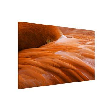 Produktfoto Magnettafel - Flamingofedern - Memoboard Quer 2:3