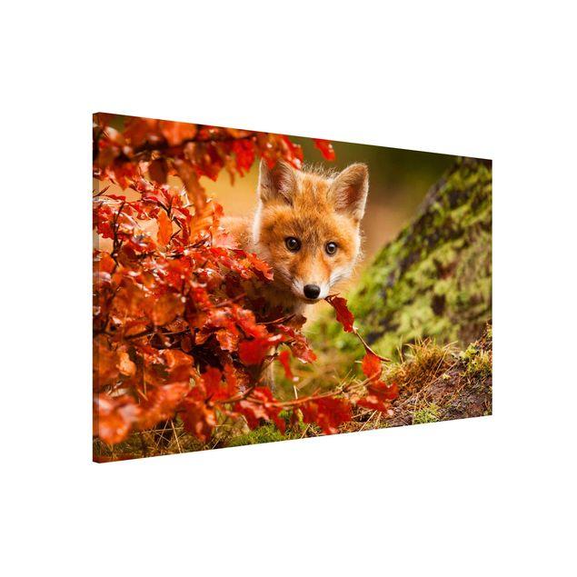 Produktfoto Magnettafel - Fuchs im Herbst - Memoboard Quer 2:3